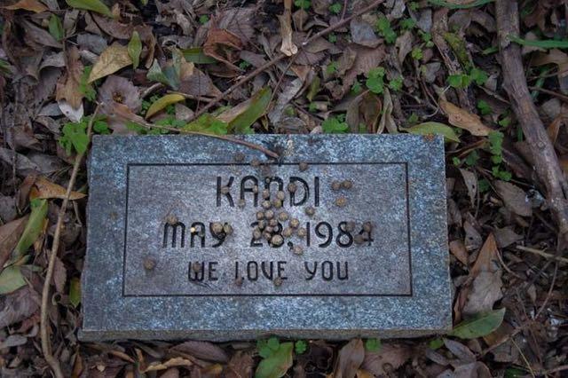 cimitero animali Seph Lawless 003