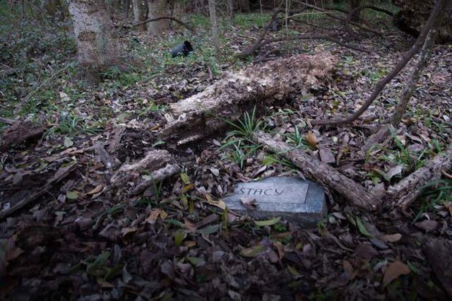 cimitero animali Seph Lawless 010