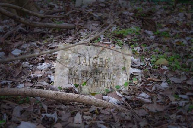 cimitero animali Seph Lawless 011