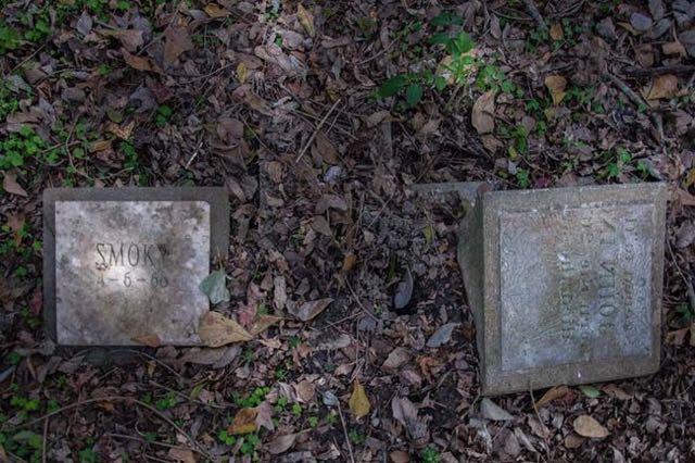cimitero animali Seph Lawless 013
