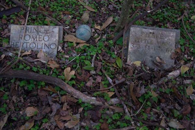 cimitero animali Seph Lawless 014