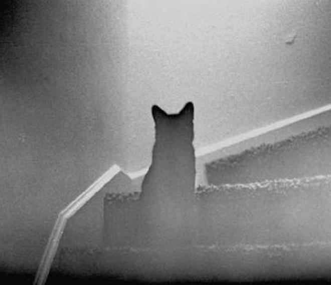 fantasmi degli animali