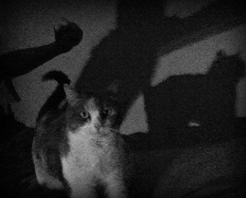 poteri paranormali dei gatti